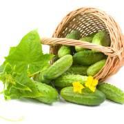 Огурец для похудения: великолепный зеленый помощник с грядки!