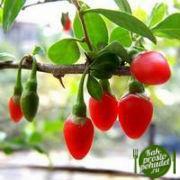 Эффективное применение ягод Годжи для похудения!