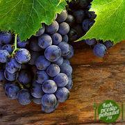 Не знаете, как начать сбрасывать лишний вес? Эффективная виноградная диета станет вашим лучшим помощником!